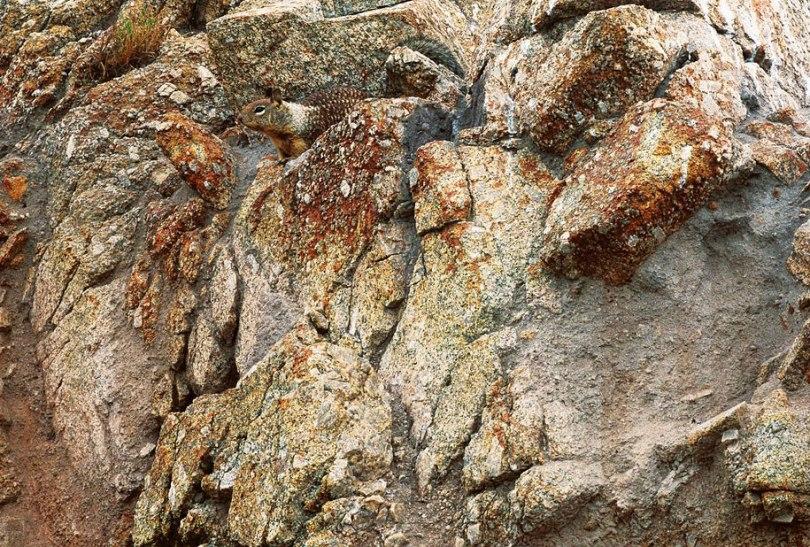 animal-camouflage-photography-art-wolfe-6