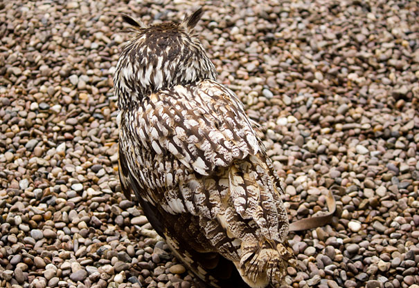 camouflaged-owls-13
