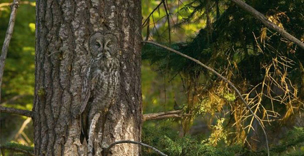 camouflaged-owls-22